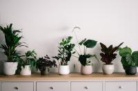 Dining room buffet table with row of plants