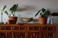 Dining room buffet table with symmetrical plants