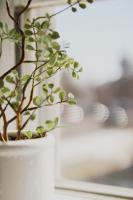 White plant pot with green plant
